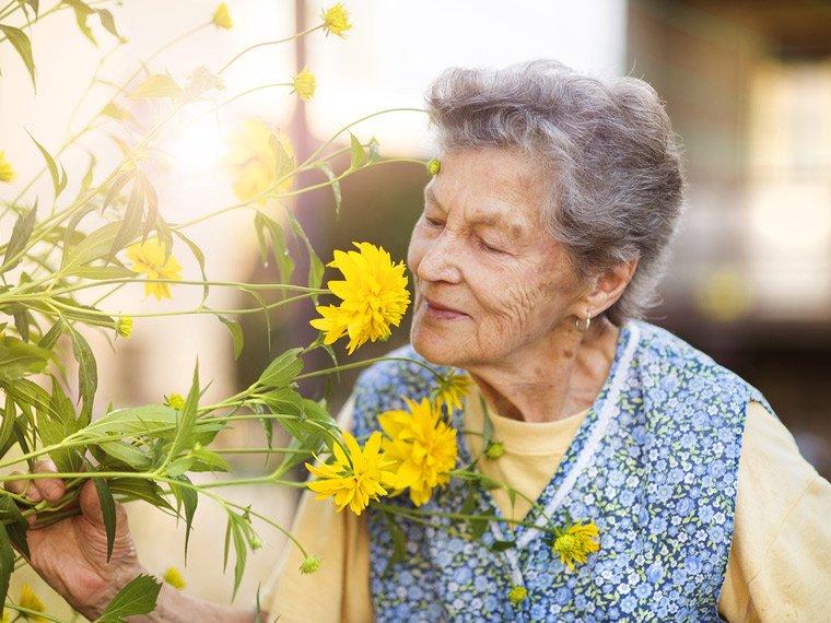 Warum der Geruchssinn im Alter abnimmt
