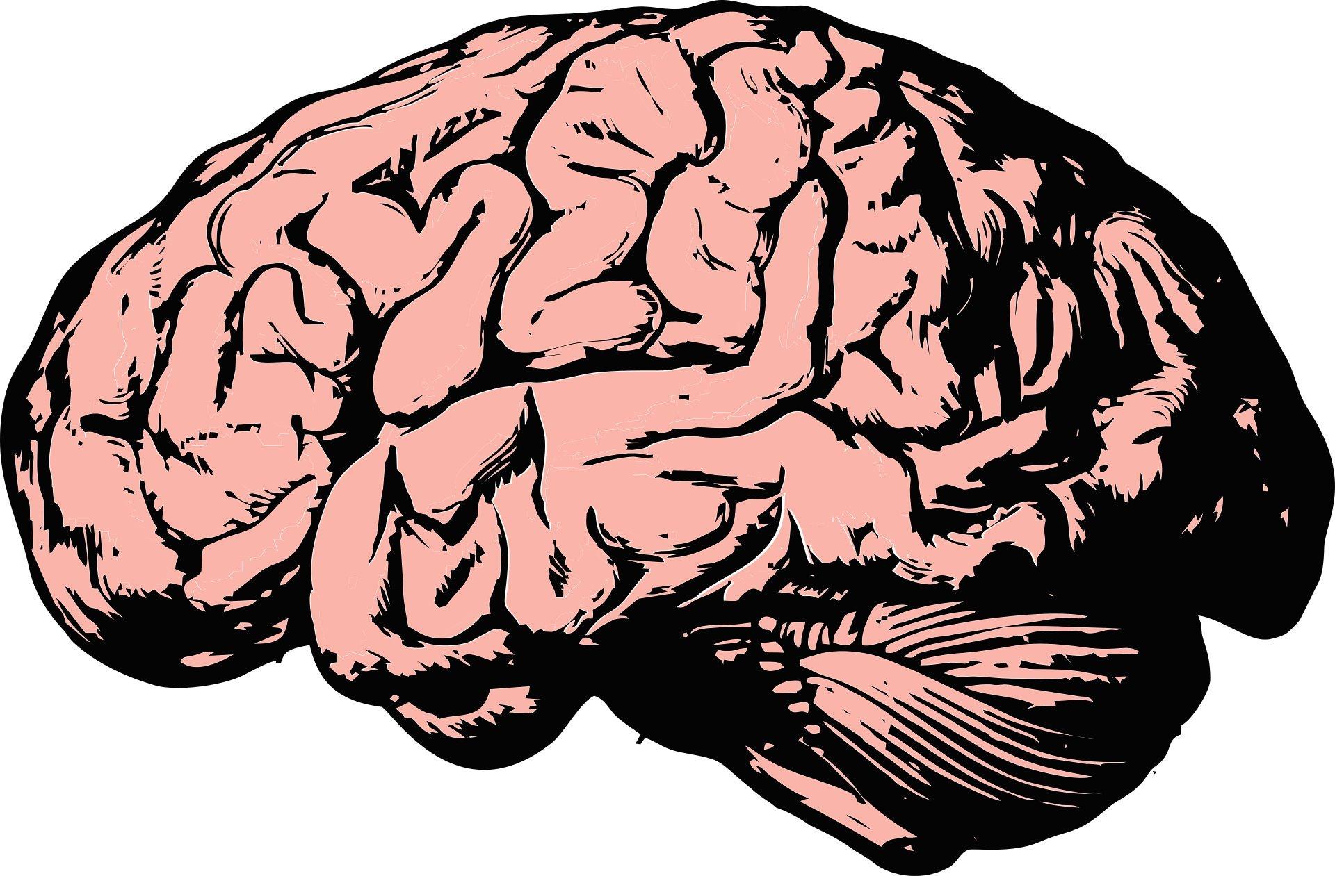 """Ihre alternde Gehirn: Ist es """"use-it-or-lose-it""""?"""