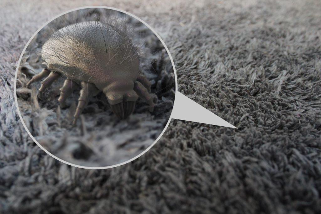 Milben –Arten, Vorkommen und Bekämpfung