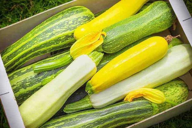 Ernährung: Vorsicht beim Verzehr von Zucchini