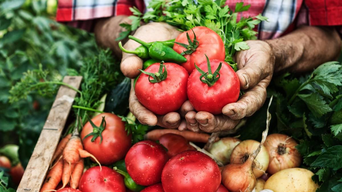 """Gesund und schlank mithilfe der Darmflora: """"Wir sollten essen wie ein Gärtner"""""""