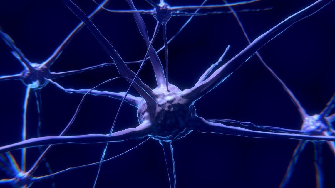 Die Genetiker, die Identifizierung von molekularen Signalweg für Autismus-bezogenen Störung