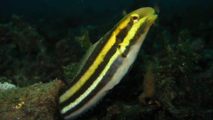 Sind sich Fische ihrer selbst bewusst? Diese Fische erkennen sich im Spiegel!