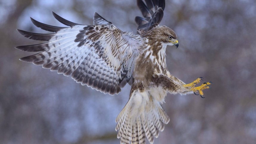 Krank nach Vogelattacke