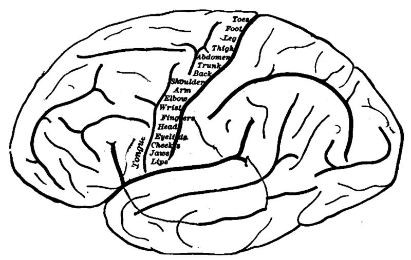 Wissenschaftler identifizieren Veränderungen der neuronalen Konnektivität im Kortex bei OCD-Patienten