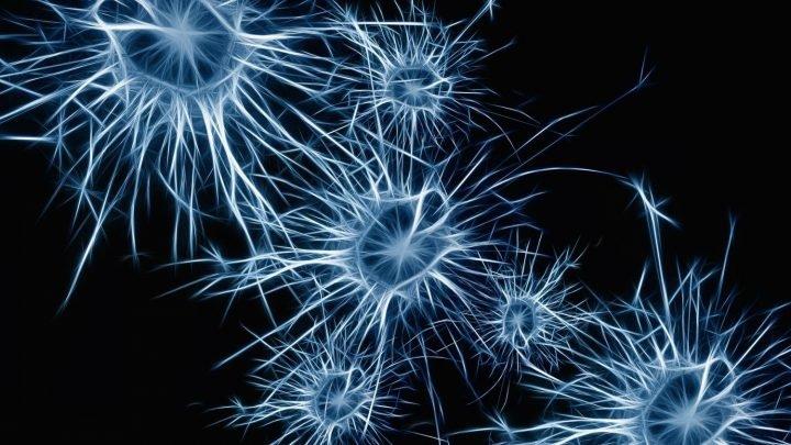 Entzündung Signale induzieren Vegetationsruhe im alternden Gehirn Stammzellen