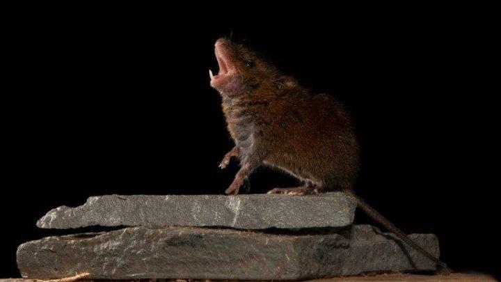 Gesangsstudium Mäusen schlägt vor, wie die säugetier-Gehirn erreicht Gespräch
