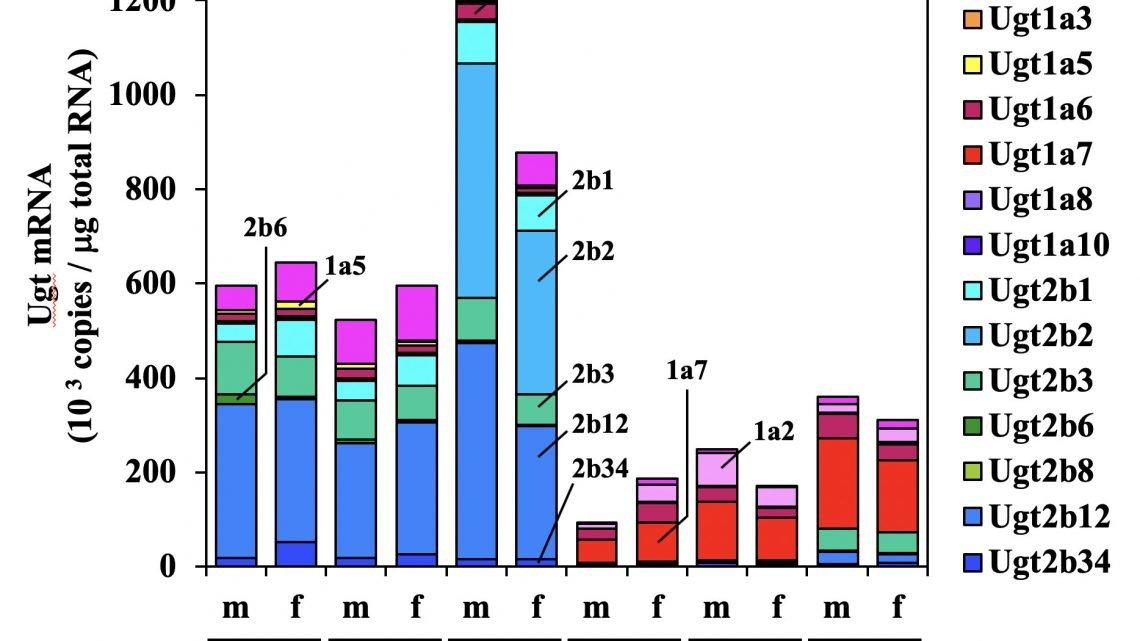 Xeno/endobiotic Stoffwechsel Potenzen variieren zwischen den Stämmen und sex in Ratten