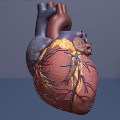 Neue Technik zeigt Versprechen für Herz-Muskel-regeneration