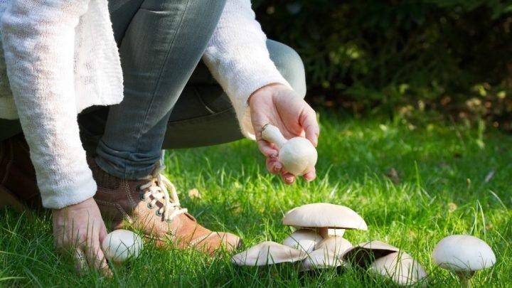 Entdeckt: Pilze können das Gedächtnis fördern
