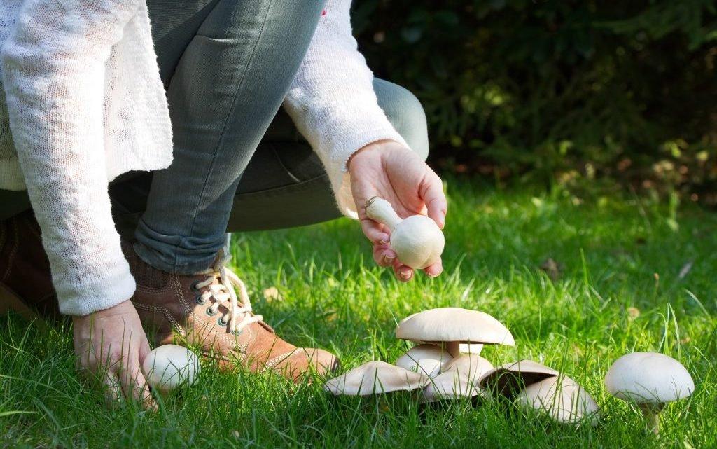 Ernährungsstudie: Pilze helfen dem Gedächtnis auf die Sprünge
