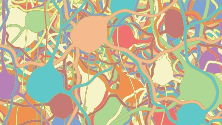 Erkunden hypothalamischen Schaltkreisen, ein neuron zu einer Zeit,