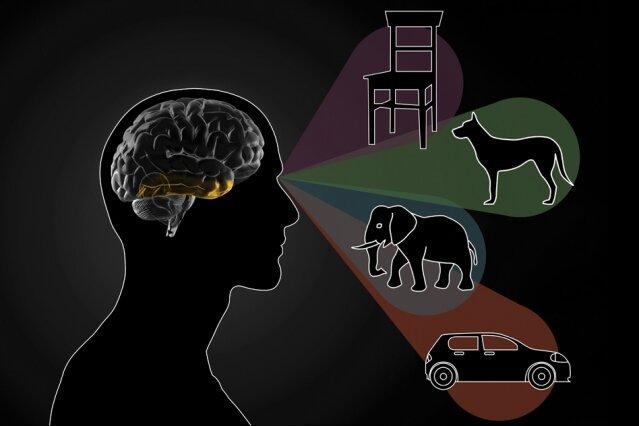 Die inferotemporal cortex ist der Schlüssel zur Differenzierung zwischen Objekten