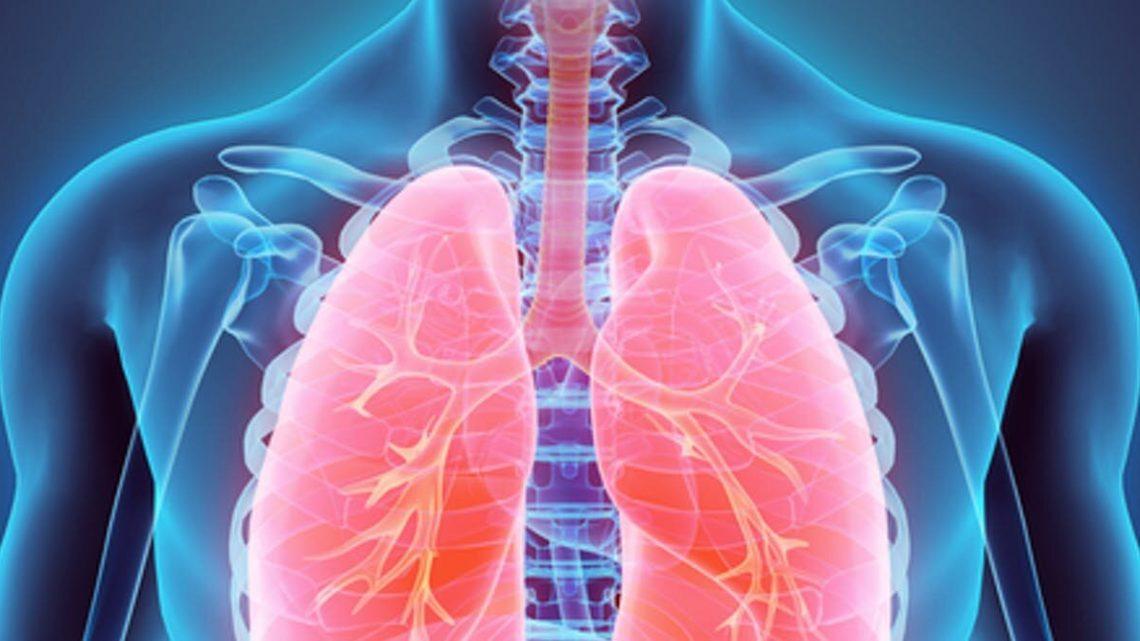 Wir wissen, Lunge notwendig sind, aber wussten Sie, dass Sie auch schön sind? Ein Anatomie-professor erklärt