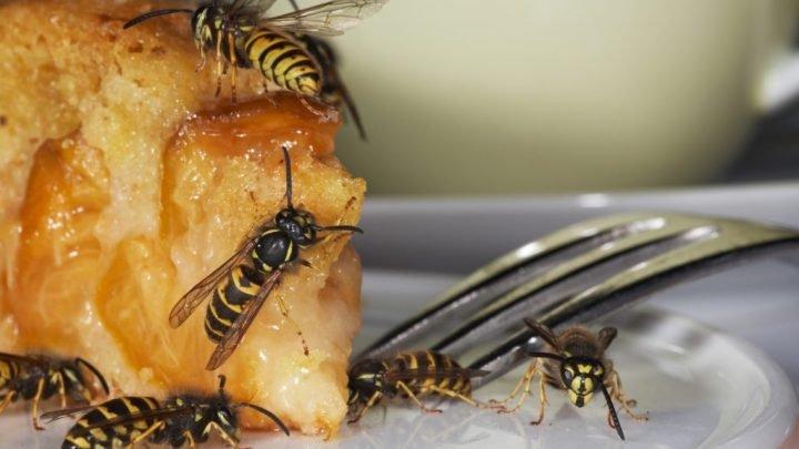Besser als Wespenstiche: So lassen sich Wespen vertreiben