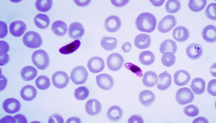 Masse Droge, können die Behörden gewähren der Bevölkerung Schutz gegen die malaria