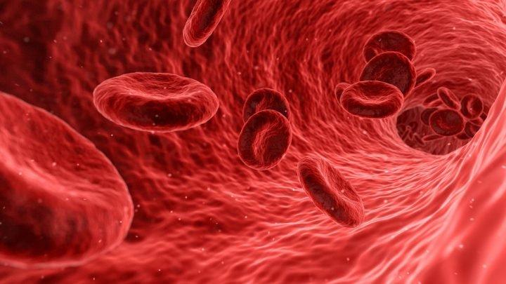 Blutfluss Kommandozentrale im Gehirn entdeckt