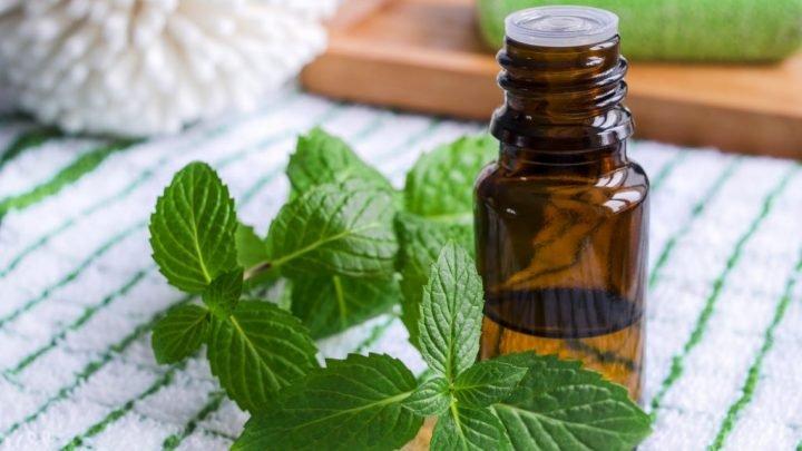 Naturheilkunde: Pfefferminzöl hilft gegen Schluckbeschwerden und bei Brustschmerzen