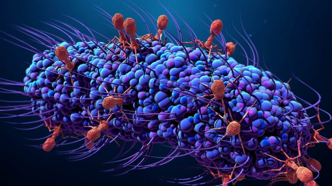 Viren zu stoppen cholera – Infektionen die virale Feind mit tödlichen Bakterien könnten der Menschheit Freund