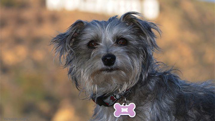 Es ist die Türkei-Zeit! Unser Führer Zu Einem Glücklichen Haustier Thanksgiving! – Holen! Pet Care