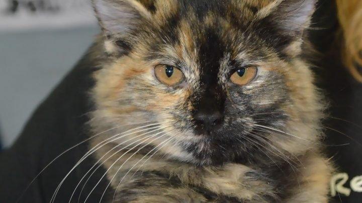 Tipps für die Ersten 30 Tage des Cat-Annahme – Holen! Pet Care