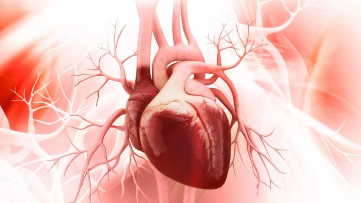 Herz-Motor entschlüsselt: Bisher unbekannte Mini-Eiweiße sind Treibstoff für das Herz
