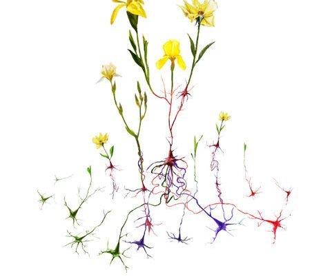 Forscher entdecken, wie das Gehirn Veränderungen beim erlernen einer neuen Fertigkeit