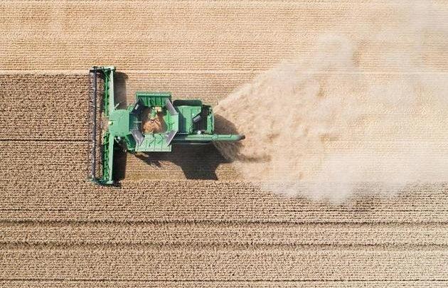 """Siegel """"Ohne Gentechnik"""" täuscht Verbraucher: Warum wir Pflanzenzüchtung brauchen"""