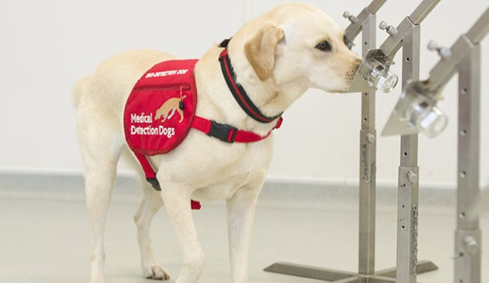 Hund Detektive erschnüffeln schädliche Bakterien verursachen Lungen-Infektionen