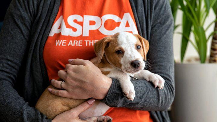 Besondere Gelegenheit für die Mitarbeiter von Bundesbehörden, um Tieren zu Helfen