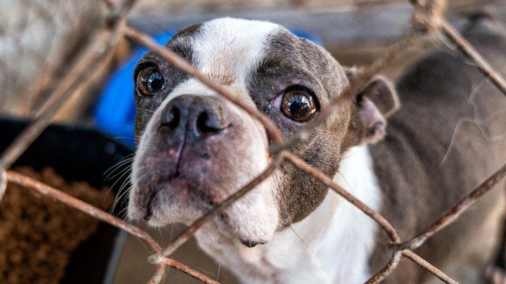 ASPCA Hilft bei der Rettung von Mehr als 75 Tiere aus Florida Grausamkeit Fall