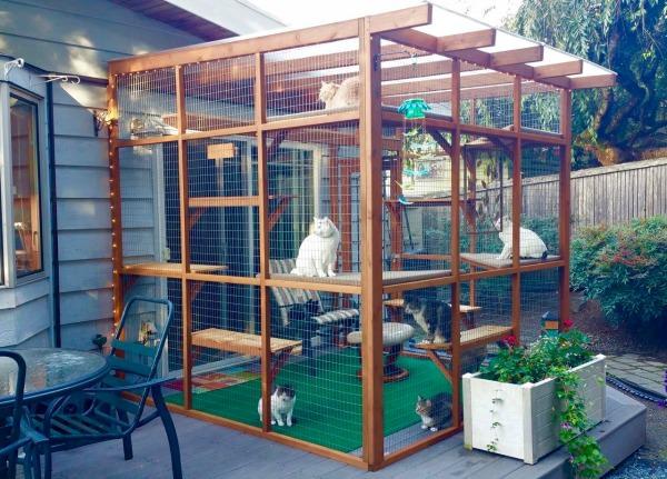 Catios Gebaut Werden Können, in Drei Stunden oder Weniger, und Lassen Sie Ihre Katzen die im Freien Genießen Sicher