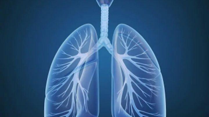 Lungentransplantation mit ex vivo lung perfusion möglich