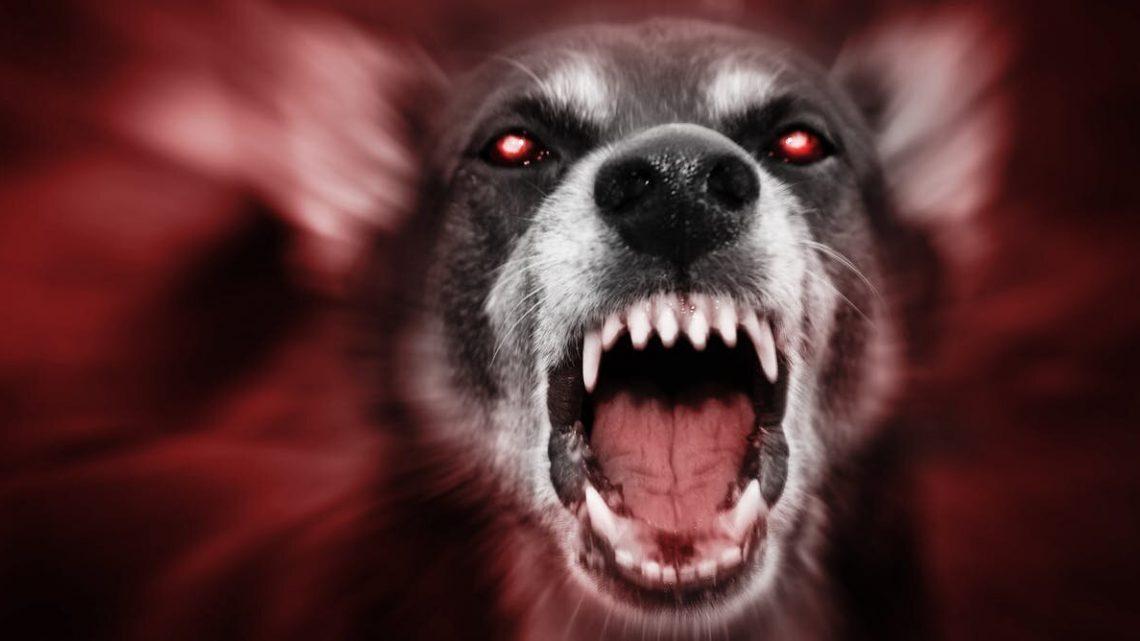 Tollwut' schrecklichen Symptome inspirierte Erzählungen von Menschen verwandelte sich in Werwölfe, Vampire und andere Monster