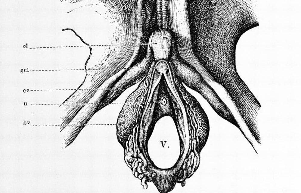 Oh, oh, oh! Die Klitoris gibt sicherlich Vergnügen. Aber es tut auch Frauen helfen, Schwanger?