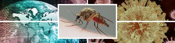 Zika-Impfstoff schützt sowohl Mutter und Fötus, aber Mama braucht eine höhere Dosis, wenn Schwanger