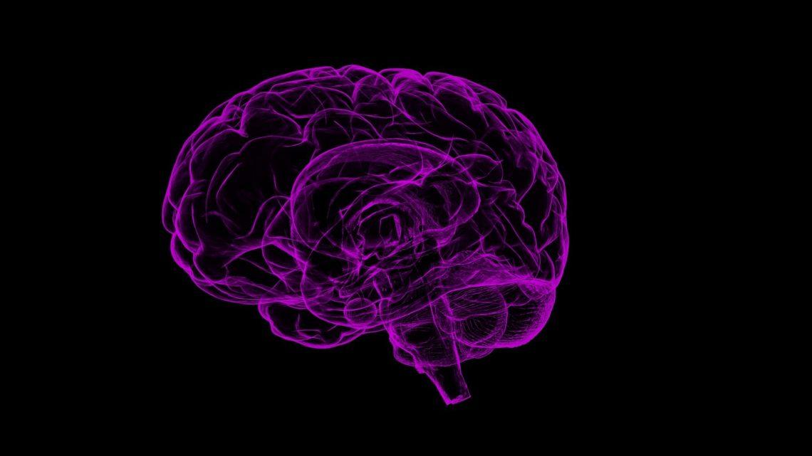 Zuordnung der relais-Netzwerke unseres Gehirns