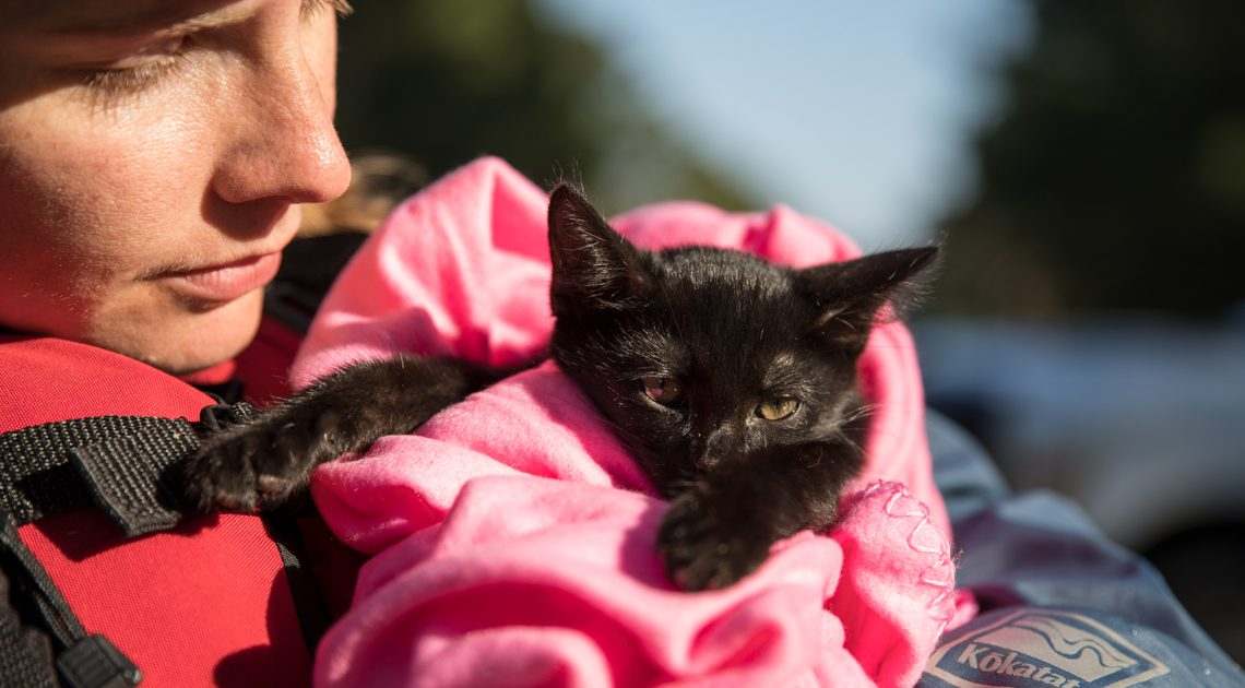 ASPCA, Erscheint vor dem Kongress zu Unterstützen BEREIT zu Handeln