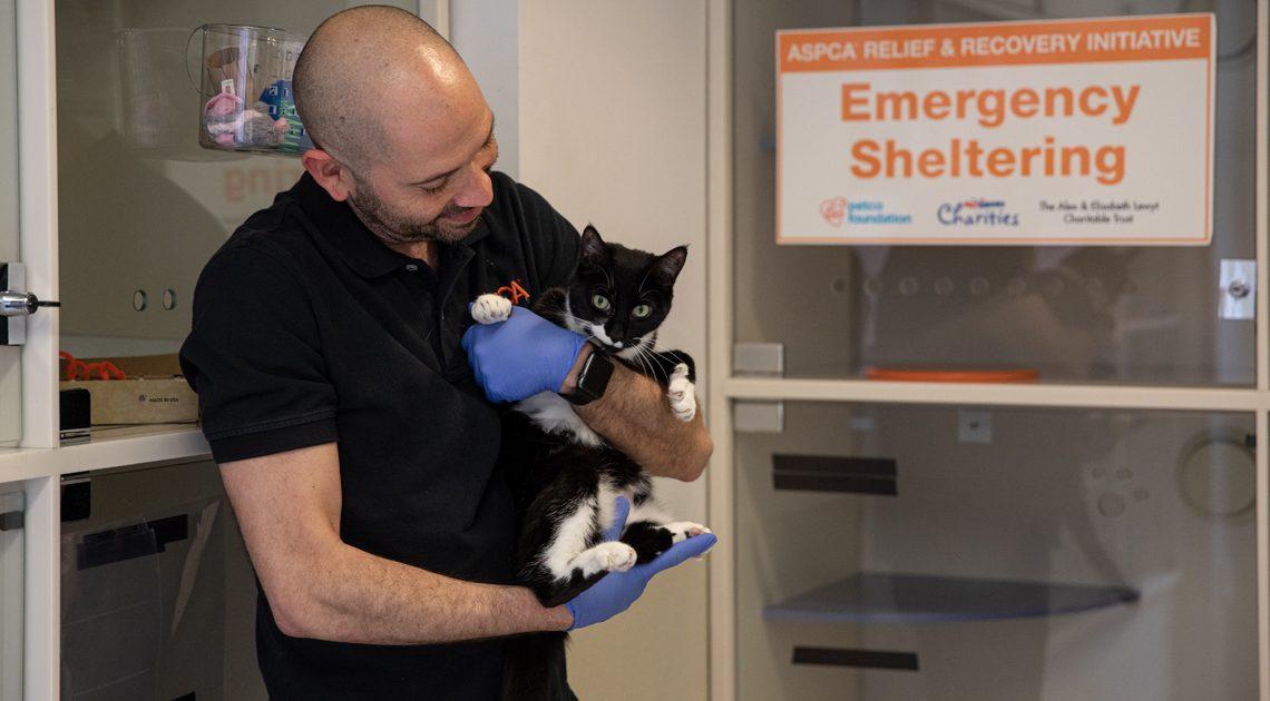ASPCA Verpflichtet zu Helfen, Die 200.000 Betroffenen Tiere von COVID-19