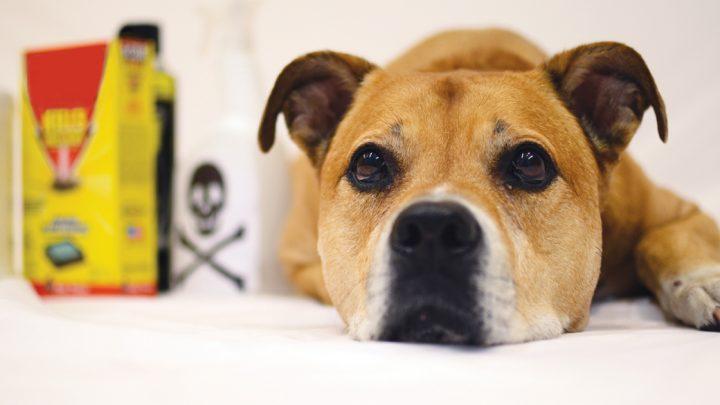 Pet-Gifte: Bewusst Sein, diese Produkte für den Haushalt und Reinigungsmittel