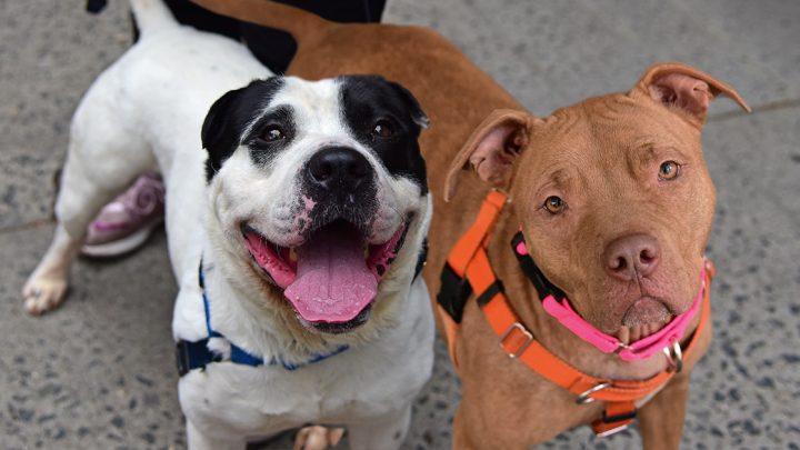Aktive Hunde Sucht, dich über alles liebender Familien: Treffen Sie Bobbie und Huron