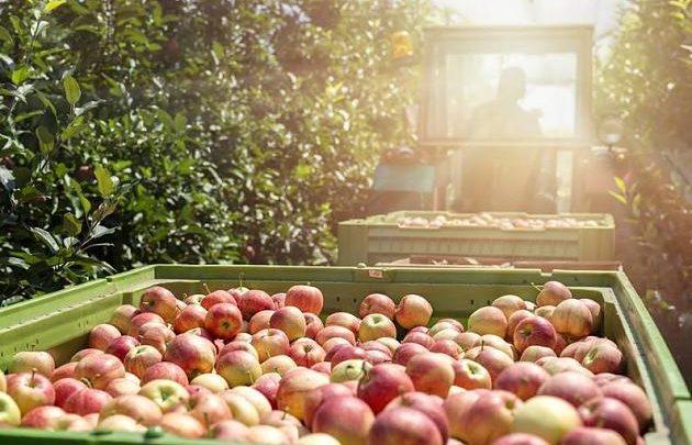 Angespannte Situation: Ist die Apfelernte durch die Corona-Krise in Gefahr?