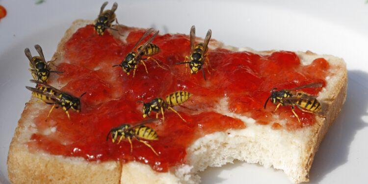 Wespen vertreiben: Diese Tipps helfen – Naturheilkunde & Naturheilverfahren Fachportal
