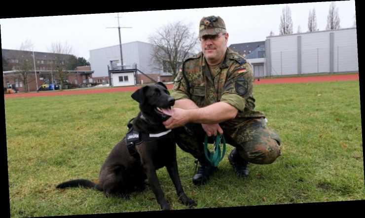 Wie Therapiehunde traumatisierten Soldaten wieder auf die Beine helfen